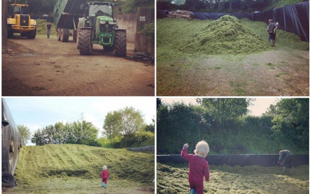 Farm News – First Silage Cut