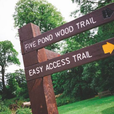 Fyne Court Trails